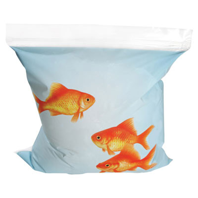 """Off the Hook"" Goldfish Sandwich Bags"