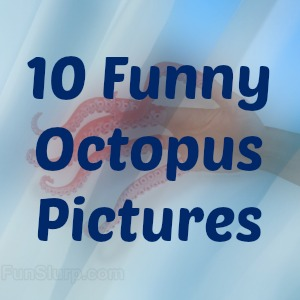 10 Funny Octopus Pictures
